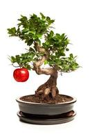 albero dei bonsai con grande mela isolata on white foto