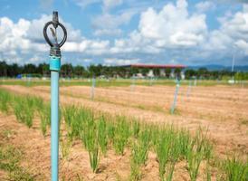 irrigazione a pioggia per il campo agricolo nel paese in via di sviluppo foto