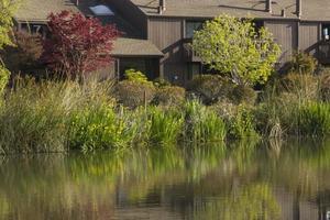 primavera alla laguna neary foto