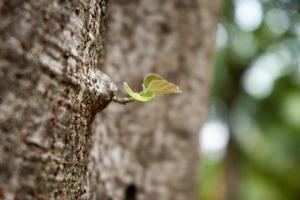 foglietto di albero foto
