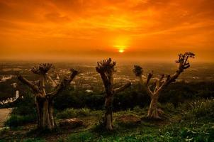 alberi la sera foto