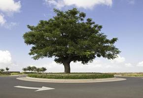 albero su intersezione rotatoria foto