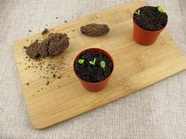 pianta che germoglia in vaso di fiori