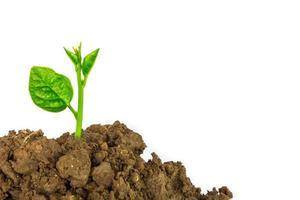giovane pianta verde isolato su uno sfondo bianco foto