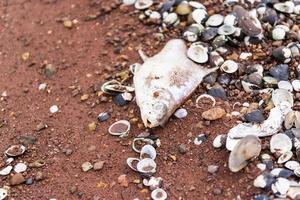 pesce morente (orata) sulla fine del banco