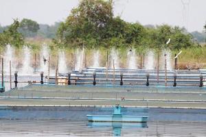 coltivatori di gamberetti venduti, esportati fuori dal paese. foto