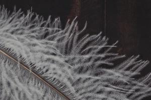 primo piano della piuma bianca foto