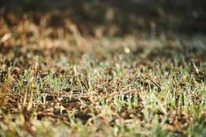 erba verde nella lente tilt shift