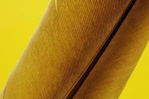 tessuto giallo piuma marrone