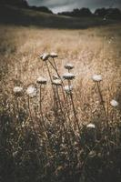 fiori bianchi in campo marrone