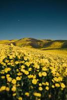 campo di fiori sotto il cielo blu foto