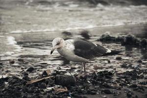 uccello bianco e grigio sulla spiaggia foto