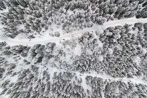 rami degli alberi bianchi e marroni foto