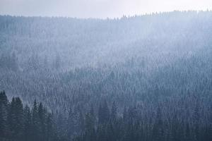 alberi verdi sotto nuvole bianche foto
