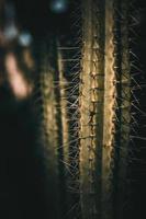 primo piano della pianta dei cactus foto