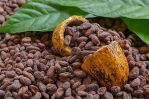 fave di cacao e frutti di cacao foto