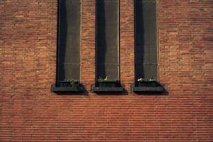 tre piante in vaso foto