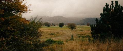 vista nebbiosa del campo in erba