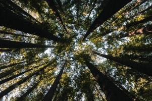 foto a basso angolo di alberi