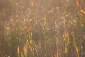 luce solare sul campo in erba foto