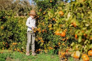 ritratto di attraente carino giovane ragazzo raccogliendo mandarini agli agrumi