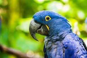 uccello allo zoo foto