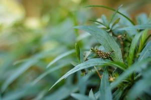 piccola pianta verde foto