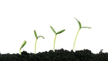 pianta in crescita foto