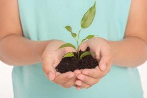 primo piano del germoglio verde nelle mani foto