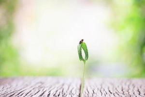 pianta che cresce su un tavolo di legno foto