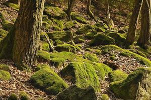 la foresta primordiale
