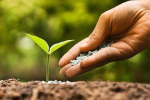 crescere e nutrire la giovane pianta verde foto