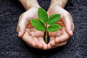 due mani che tengono e premuroso giovane pianta verde foto