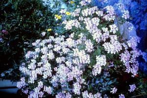 fiori in giardino