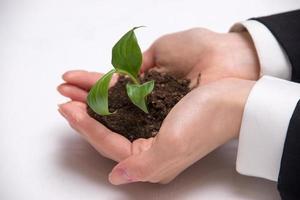 immagine di un germoglio verde nelle mani di una giovane donna foto