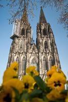cattedrale di Colonia foto