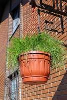 pentola con erba foto