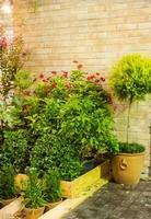 giardino interno. foto