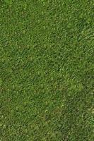trama di erba naturale foto