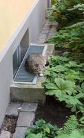 il gatto si riposa foto