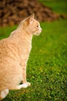 divertente gatto dai capelli rossi foto