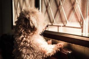 cane pozzanghera in vista laterale. foto