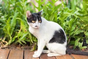gatto di colore bicolore seduto sulla pianta foto