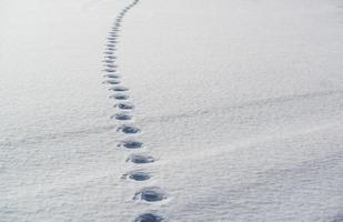 tracce nella neve foto