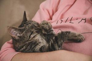 gatto in braccio alla persona foto
