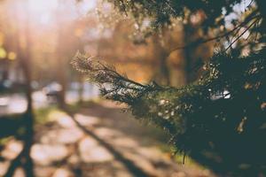 fotografia di messa a fuoco selettiva di foglie verdi foto