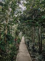 foto del sentiero accanto agli alberi