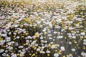 fiori bianchi e gialli