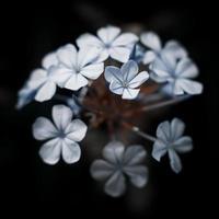 fiore bianco in vetro marrone
