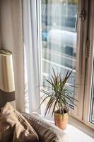 pianta e divano accanto alla finestra